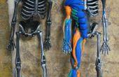 Sugru y un esqueleto de Halloween una anatomía del músculo