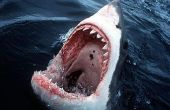 Cómo luchar contra un tiburón!
