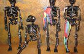 Aprender anatomía muscular con un esqueleto de Halloween