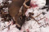 ¿Cómo caza ciervos