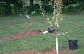 Plantar un manzano