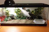 Cómo establecer hasta un terrario de reptiles