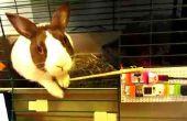 Un correo electrónico a Bunny