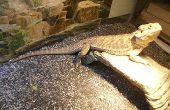 Cómo configurar un dragón barbudo terrario