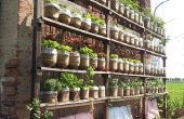 Yo riego jardín vertical con botellas de agua recicladas