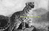 Cómo dibujar un leopardo de Amur en papel Pastel