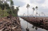 El medio ambiente-¿qué puede hacer? RECICLAR