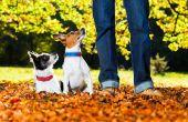 Adiestramiento de perros comandos y consejos
