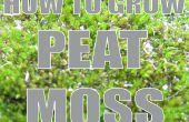 Cómo crecer: Turba de musgo