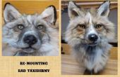 Montaje mal Taxidermia