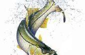 Una gran guía para pesca