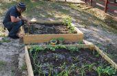 Jardines de vegetales para la educación