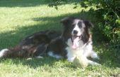 5 cosas que deben saber todos los perros