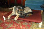 Eleva la cama del perro