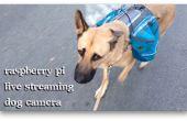 Perro Wearables (Live Streaming cámara perro)