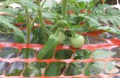 Pabellón de jardín para tomates