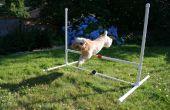 Salto de agilidad del perro