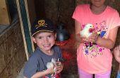 Eclosión huevos - cómo empollar huevos de gallina con una incubadora automática - procedimientos de incubación