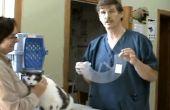 Cómo poner un Collar isabelino en un gato