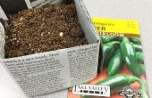 Macetas biodegradables periódico