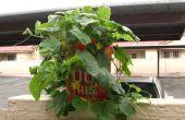 Jardinería de contenedor
