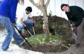 Cómo mover un árbol, el vehículo y el método a