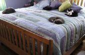 Cómo a PACK y mover su gato con seguridad a una nueva residencia
