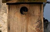 Cuatro proyectos de carpintería Popular