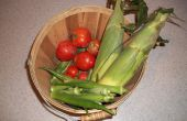 Okra, maíz y tomate