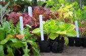 Fácil de hacer marcadores de la planta de percianas