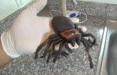 Araña muerta bajo el émbolo broma