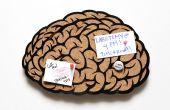 Junta del cerebro