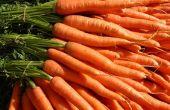 Piano de zanahoria (un proyecto MaKey MaKey)