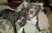 Remedio natural para los perros y las pulgas