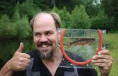 Marco de pescado para tomar fotografías de micro-peces vivos