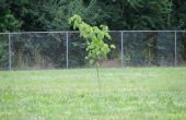 Jardinería de guerrilla: Una guía básica