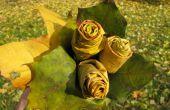 Rosas del arce hojea.