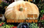Crecer una calabaza gigante (gigante del Atlántico) de semilla