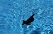 Cómo enseñar a un gato a nadar.
