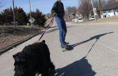 Skatejoring con perros