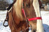 ¿Cómo ejercer su caballo con tiempo la administración