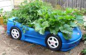 Caja de verduras del coche de la raza
