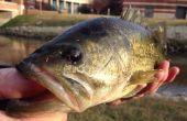 Pesca de la lubina para profesionales y principiantes