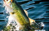 Consejos de pesca