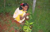 Diversión de verano: Cómo creamos nuestro jardín de la casa