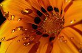 Fotografiar flores y plantas