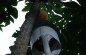 Selector de Papaya resistente
