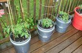 Cómo cultivar tomates grandes en contenedores
