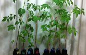 Botella de crecimiento hidropónico DIY