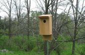 Eastern Bluebird casas (de las herramientas de mano)